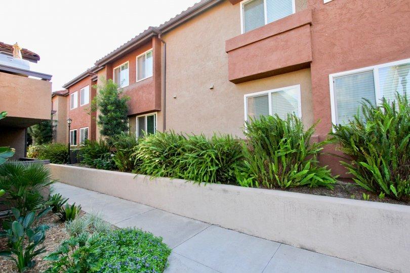 Artesia , Escondido  ,: California, plants,mauve building