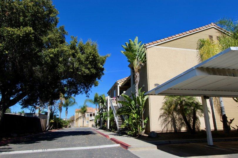 Brookhaven, Escondido, Californa, lawn, shade, table, grill, pavilion,