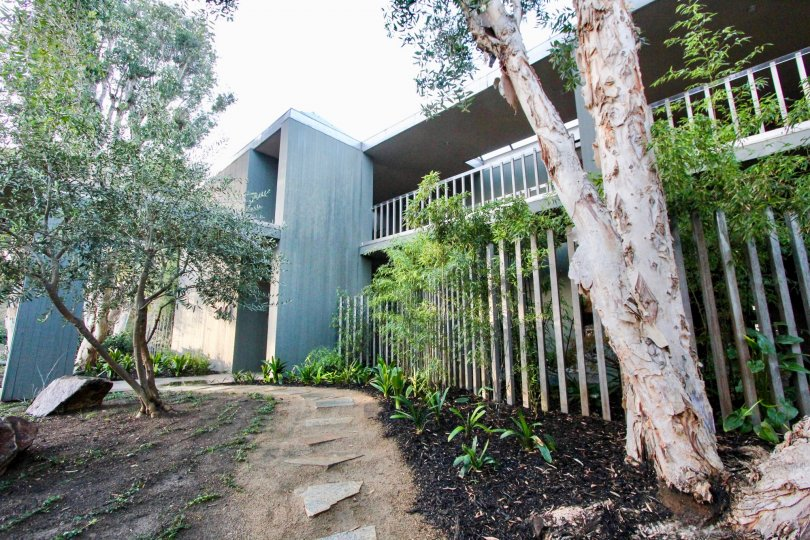Modern style architecture with flagstone lined pathway adjacent to gardens with mature trees at 3100 Front