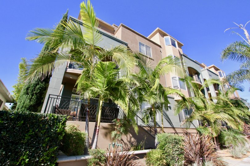 A sunny day in the area of Centre Court Condominiums, outside, balcony, palm trees, windows