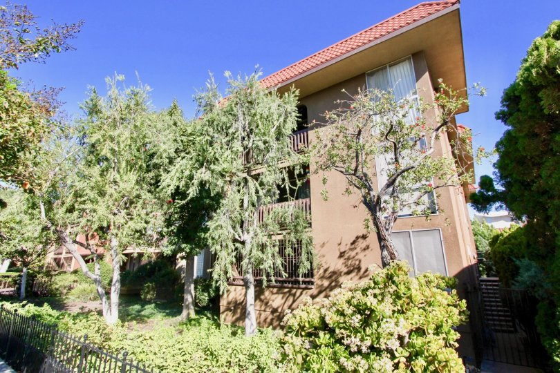 THE APARTMENT IN THE LOMA CRESTA WITH THE TREES, PLANTS, WOODEN WALL