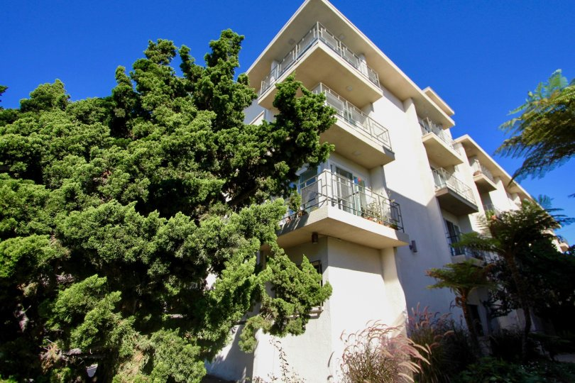 The Widest tree in Park Royal is attached with the Apartment in Park Royal