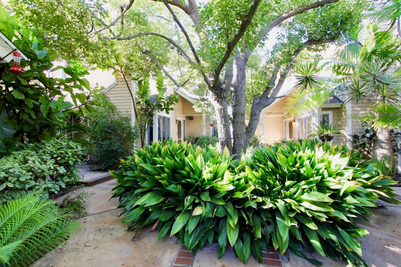 Garden with trees in Peppercorn community, Hillcrest, CA