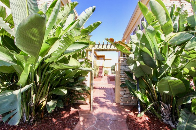The entrance to a hallway surounded by palm trees and some houses in the background during a sunny day in Holly Avenue Condos, Imperial Beach, CA