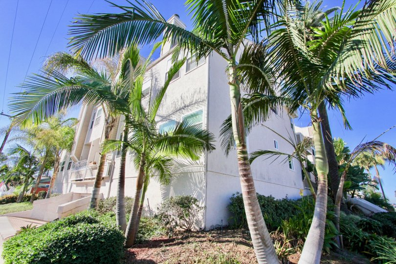 Three story condos near palm trees at Sandcastle Townhomes in Imperial Beach California