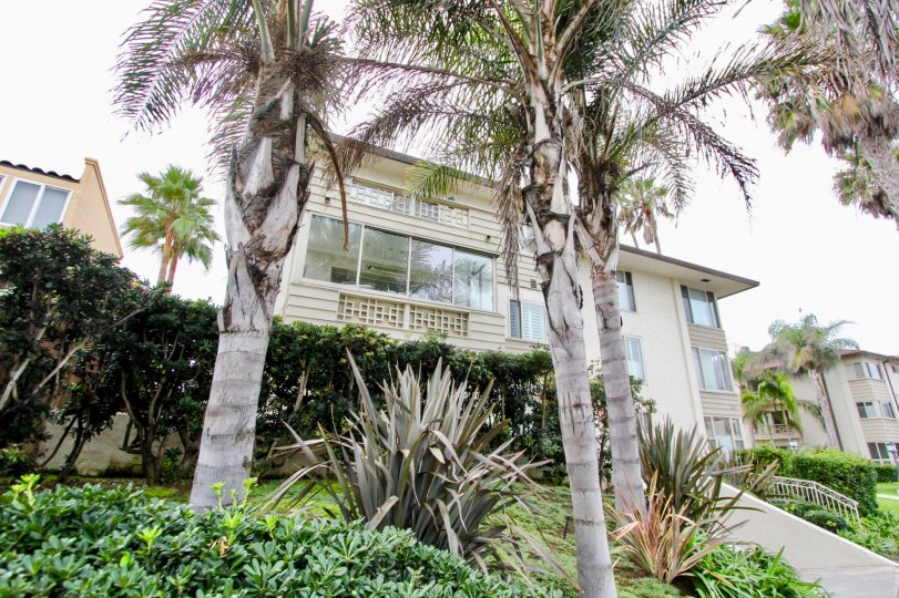 220-240 coast apartment has tall trees and plants flowers