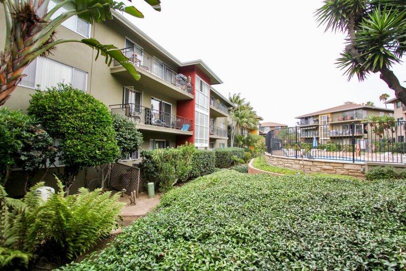 Three story gray residential units near ivy at Capri Aire in La Jolla CA