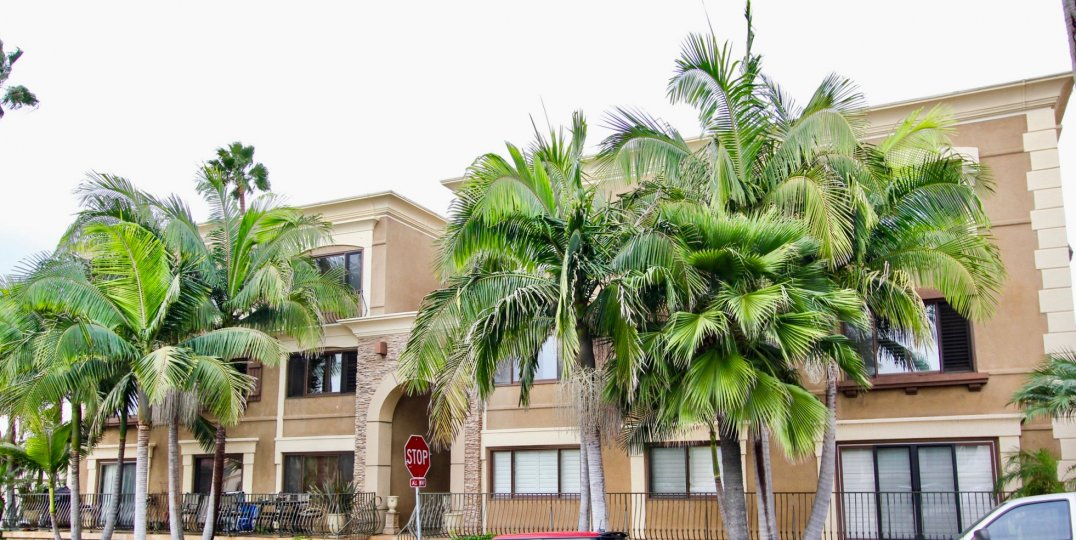 Large brown building with huge palms inside Chiara in La Jolla CA