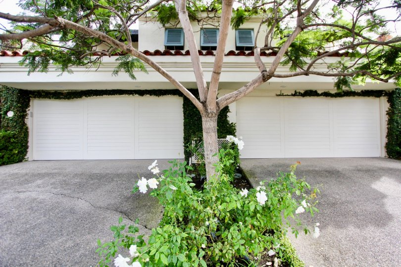 Two white garages with roses between them at El Paseo Grande in La Jolla CA