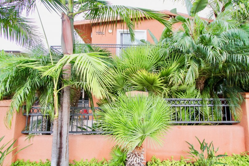 Very lush tropical landscaping on the side of Herschel Estates in La Jolla, California