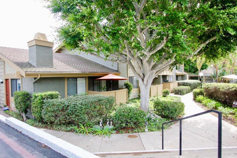 Large green tree in front of residence at La Jolla Park Villas in La Jolla CA