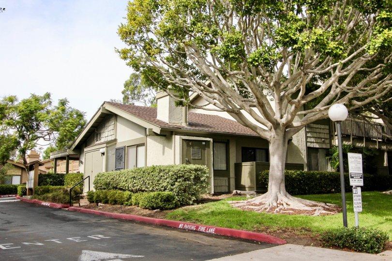 Housing with trees and grass inside of La Jolla Park Villas in La Jolla CA