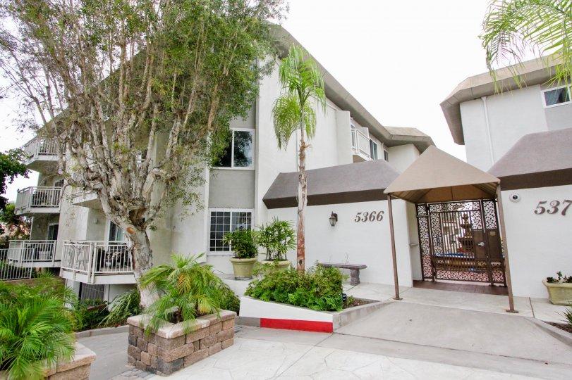 White condominiums with tall trees inside La Jolla Place in La Jolla CA