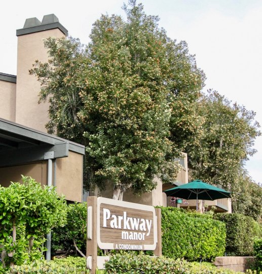A sunny day in the area of Parkway Manor, condo, cars, parking area, tree