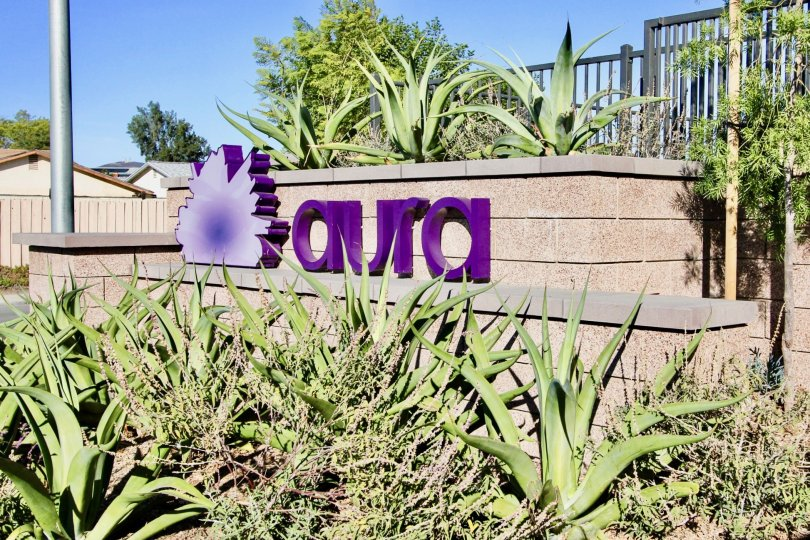 : Aura   Mira Mesa   California,name,purple,plants