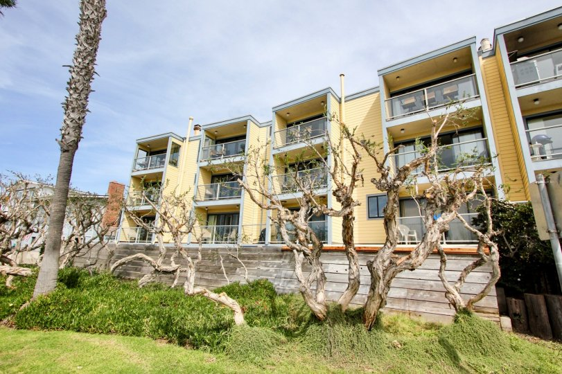 Twisted Trees outside of the balconies at La fin in Mission Beach.