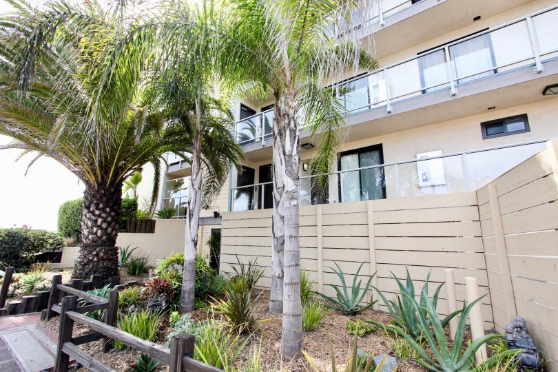 Four palm trees near Townhomes inside MIssion Beach CA