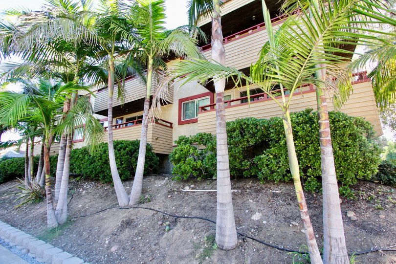 An apartment building with a row of palm trees and bushes in front during a sunny day in 4055 Falcon, Mission Hills, CA