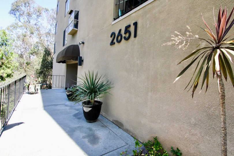 Potted plants lining the entryway to Maplefront in Mission Hills, CA