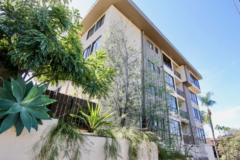 A SUNNY DAY IN THE SPRUCEWOOD APARTMENT WITH TRESS, PLANTS