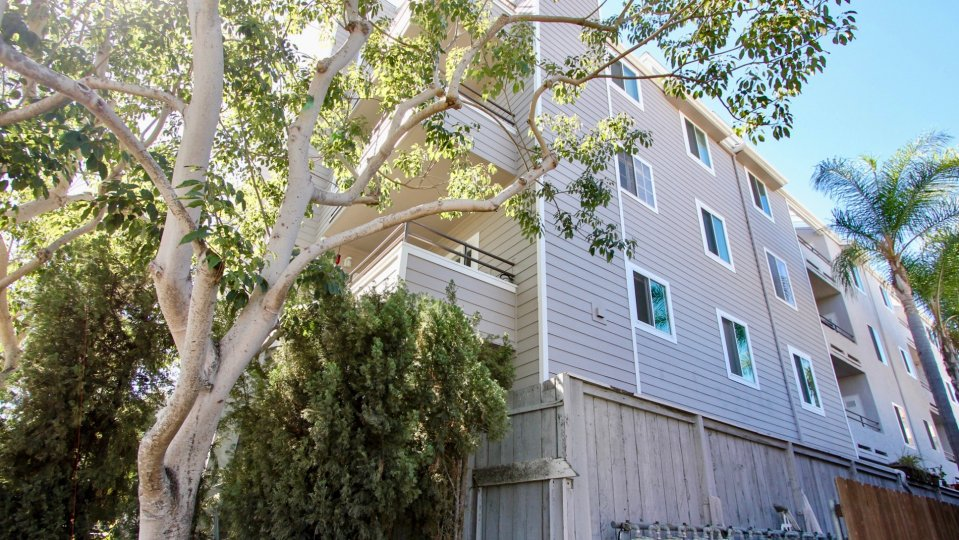The tree-filled back view of a four story apartment complex in Windsor Place community of Mission Hills, California