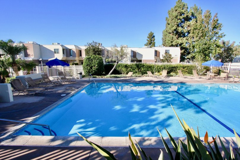 Gorgeous, large, outdoor pool with patio chairs and umbrellas in the Cerro De Alcala community of Mission Valley, California.
