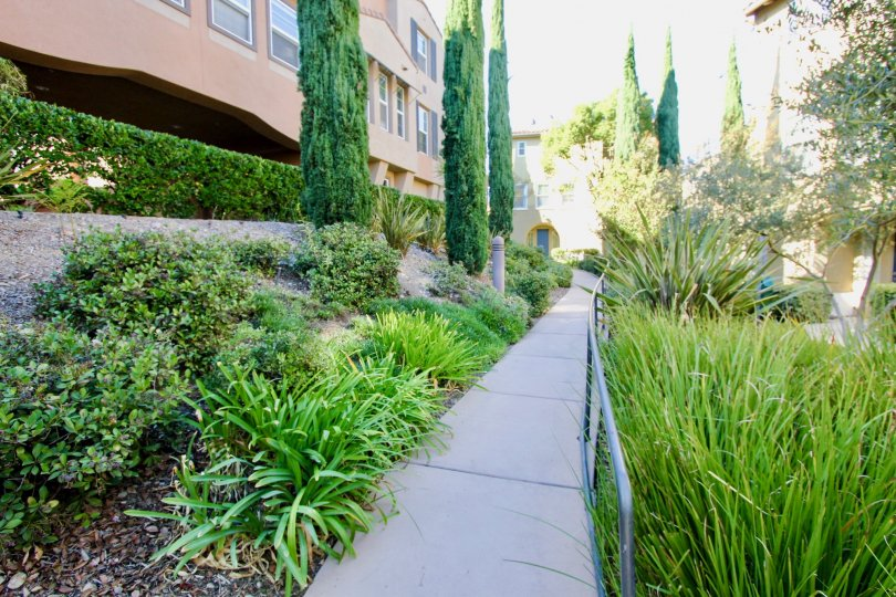 Beautiful green shrubbery and trees surround the apartment building in Mission Valley, CA