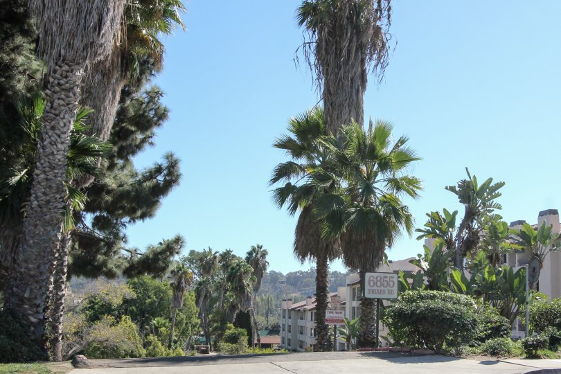 A sunny day in the area of Mission Belwood, fence, palm tree, bush