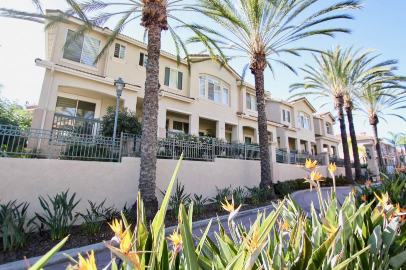 Condominiums behind a stretch of tall palm trees in the Mission Gate neighbourhood