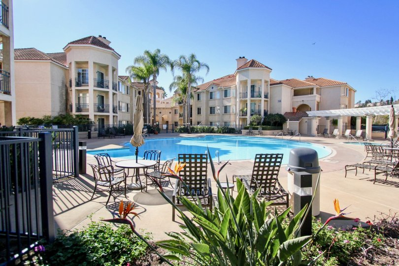 River Scene Community Mission Valley California poolside apartments palm trees tables and seating decorative plants