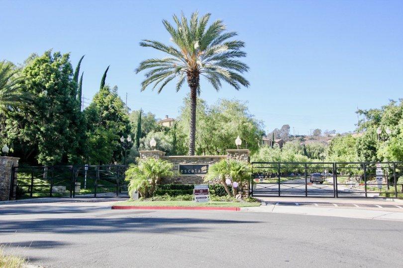Verandas at Escala, Mission Valley,California,tall tree,blue sky