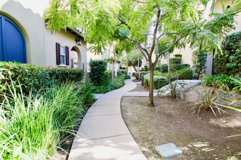 Sidewalk with trees and other landscapt at Verandas at Escala Mission Valley California