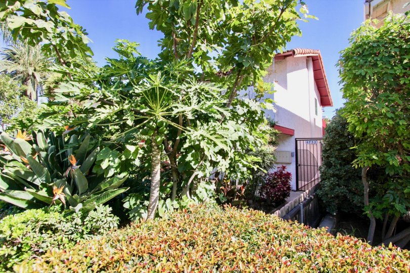 Sunny greenspace above a home with multiple types of plants and shrubs and a stucco home in the background