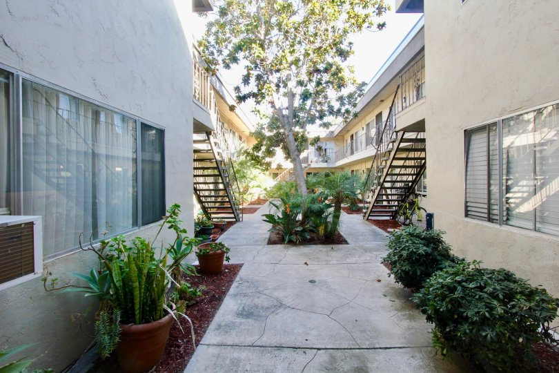 In between two buildings in California, the courtyard and plants can be seen in the garden.