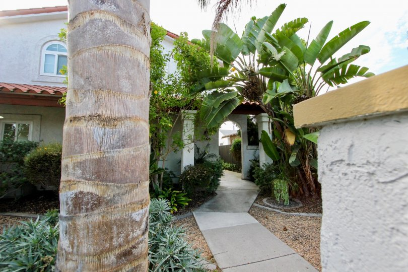 Big Palms covering breezeway at this lovely home in North Park, California.