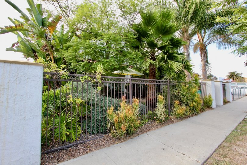Lush trees and bushes sit behind an iron fence at 4166 Wilson Ave.