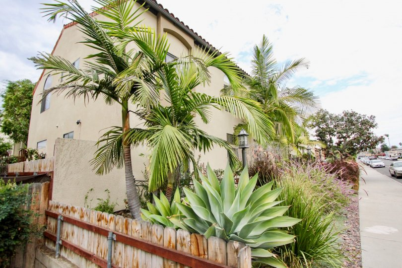 Casa Balboa II, north park, california, front yard, palm tree, wood fence