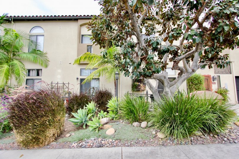 Casa Balboa II,  North Park  ,California,trees, plants, pebbles