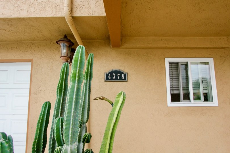 A tall cactus sits in front of a door of a home in Cliffrock Manor.
