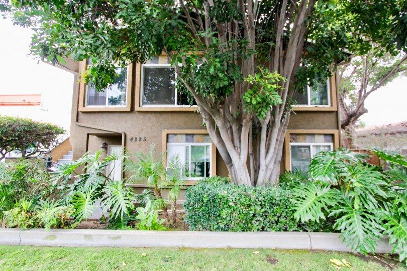 Florida Villas, North Park , California, brown building, plants