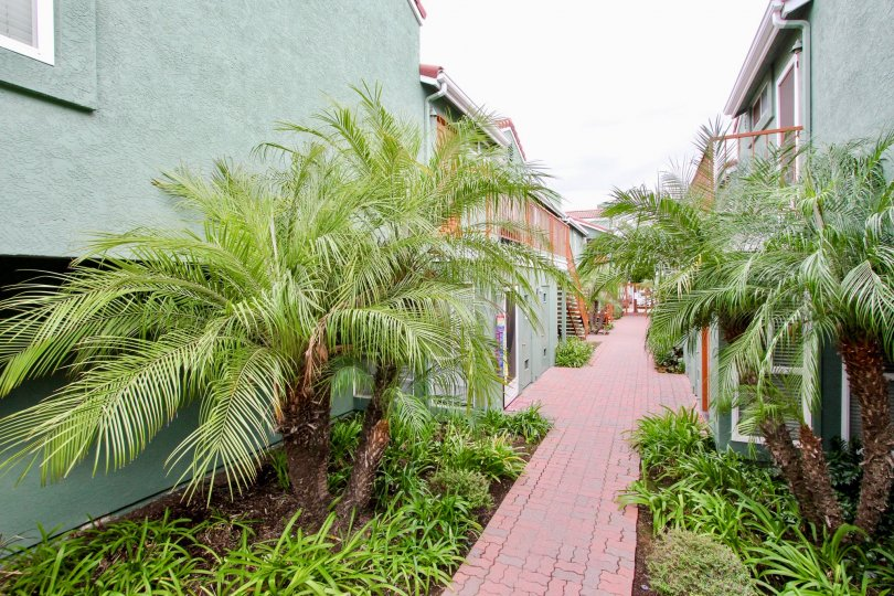 Red brick road lined with green plants and buildings inside Majestic Palms at North Park CA
