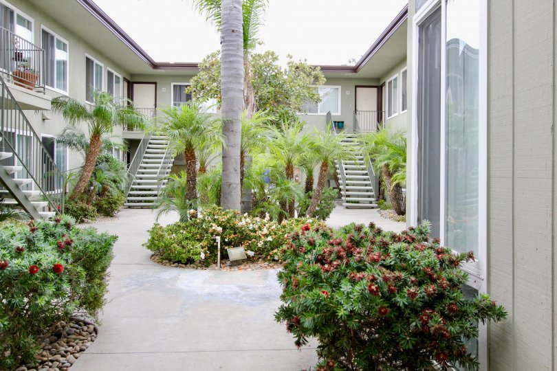 Trees in the courtyard of Mississippi Townhomes in North Park, California