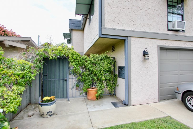 View of a house with service door with plant in the top of wall in the Morley Field Townhomes