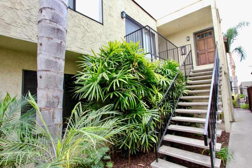 Oregon Street  , North Park, California,staircase,plants,brown door