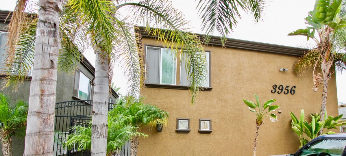 The Milano, North Park, California, adobe, palm trees