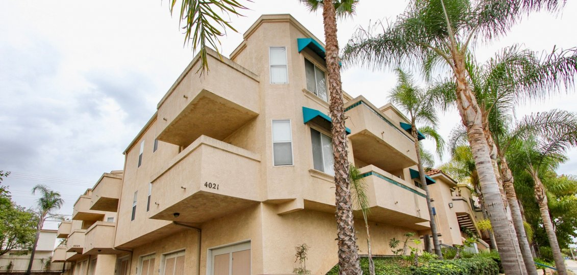 Palm trees lining a three story residential building