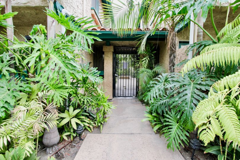 Walkway that leads to secured entrance and surrounded by lush green plants at Utah Park in North Park California