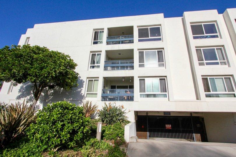 Aegea, Oceanside, California, tree, balcony. blue sky