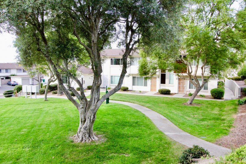 Bay Shores green and well mowed lawns and houses, oceanside, California