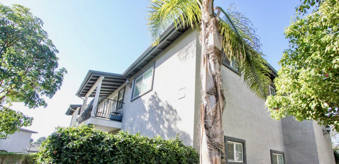 Two story gray building behind palms and trees in Oceanside CA at Las Brisas